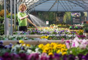 Warm weather and green-fingered Brits contribute to record-breaking sales at Wyevale GC