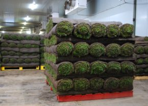 Rolawn achieves milestone with 160 millionth roll of turf
