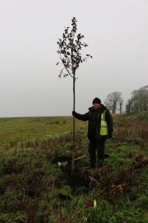 Trees for bees – Johnsons keeping the bee community 'abuzz'
