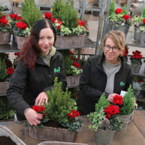 Record breaking growth for Farplants' Christmas offering