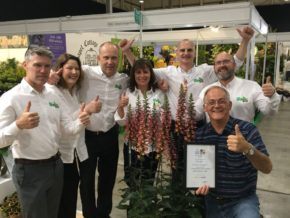 Farplants scoops five awards at the HTA National Plant Show
