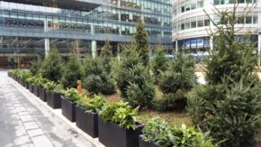 Horticultural company delivers Christmas trees to North West vibrant destination